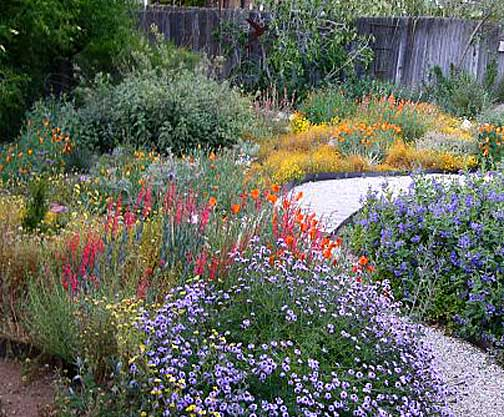 Native-Plants-Garden